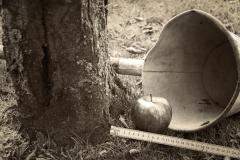 De Appel fölt nich wied van'n Stamm. (Der Apfel fällt nicht weit vom Stamm.)